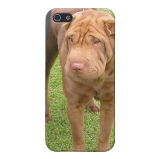 Sharpei show dog case for iPhone SE/5/5s