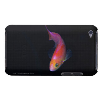Sharpfin seabass 2 barely there iPod cover