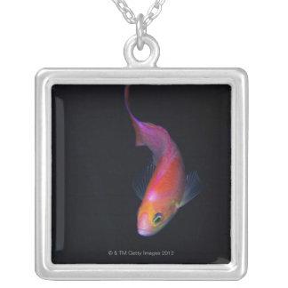 Sharpfin seabass 2 square pendant necklace