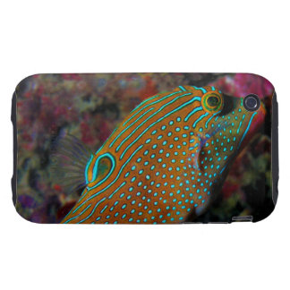 Sharpnosed Puffer Solander's Toby  Blue Spotted Tough iPhone 3 Cases