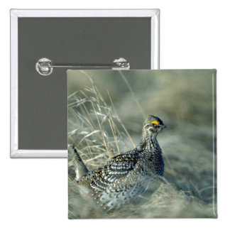 Sharptailed grouse pins