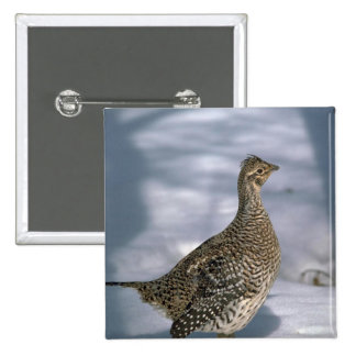 Sharptailed grouse button