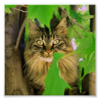 Shasta Cat Tree Climber Print / poster