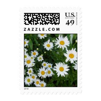 Shasta Daises 2 Postage Stamps
