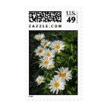 shasta daisies postage