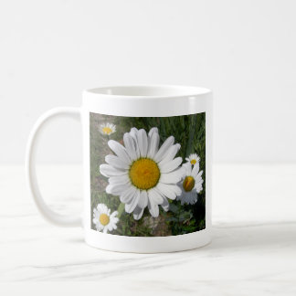 Shasta Daisy (Chrysanthemum maximum) Coffee Mug