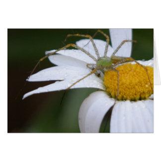 Shasta Daisy & Green Lynx Spider Greeting Card