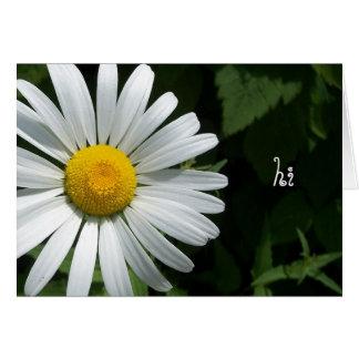 Shasta Daisy Note Cards