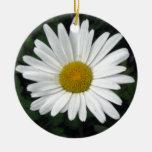 Shasta Daisy - photograph Double-Sided Ceramic Round Christmas Ornament