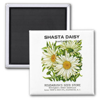 Shasta Daisy Vintage Seed Packet Magnet