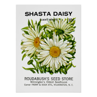 Shasta Daisy Vintage Seed Packet Poster