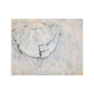 SHATTERED Oil Painted Sand Dollar (14x11in) Canvas Print