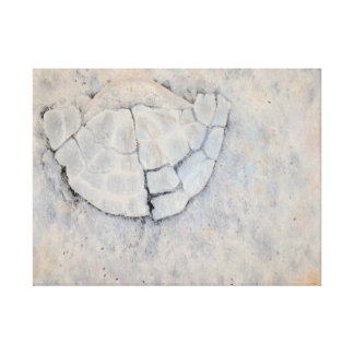 SHATTERED Oil Painted Sand Dollar Print (24x18in)