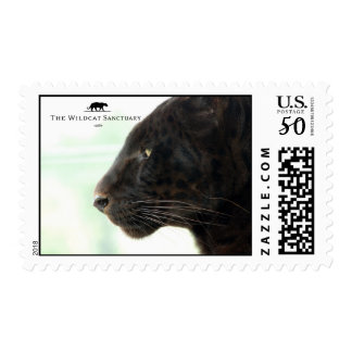 Shazam - Leopard - Stamp