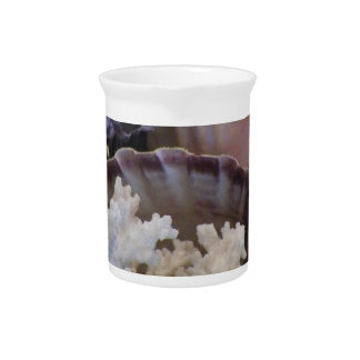 She Sells Sea Shells Drink Pitcher