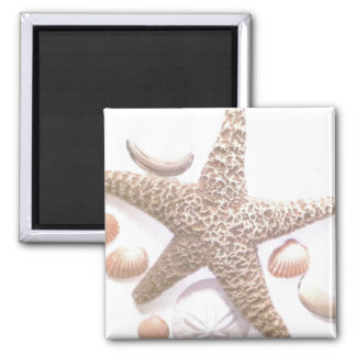 She sells sea shells magnet