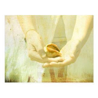 She Sells Seashells I Postcard