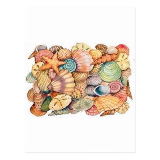 she sells seashells.jpg postcard