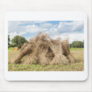 Sheaves of corn standing upright as group mouse pad