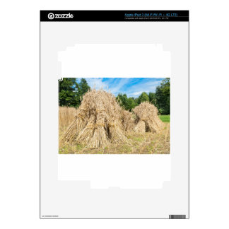 Sheaves of rye standing at rye field skin for iPad 3