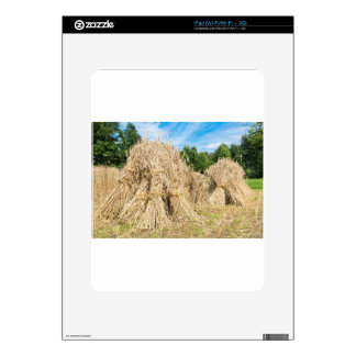 Sheaves of rye standing at rye field skins for the iPad