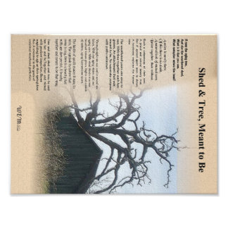 Shed and Tree - A Metaphor Photo Print