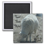 Sheep 2 Inch Square Magnet