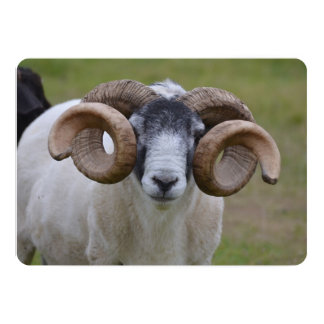 Sheep 5x7 Paper Invitation Card