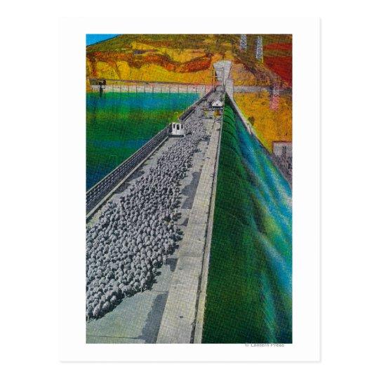 Sheep across Grand Coulee Dam Postcard
