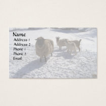 Sheep and Goats in April Snow Business Card