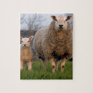 Sheep and Lamb Farm Animals Jigsaw Puzzle