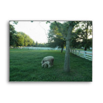 Sheep And Lamb Grazing Envelope