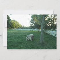 Sheep And Lamb Grazing  Invitation