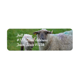 Sheep and Lamb Return Address Label