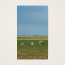 Sheep and Lambs in Meadow Small Photo Card