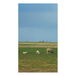 Sheep and Lambs in Meadow Small Photo Card Business Card