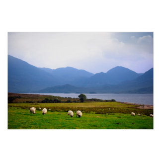 sheep and the mountains of kerry poster