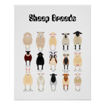 sheep breeds chart