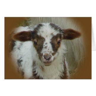 Sheep - Brown Spotted Lamb Card