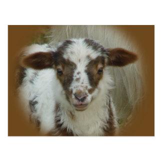 Sheep - Brown Spotted Lamb Postcard