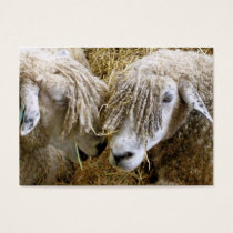SHEEP BUSINESS CARD