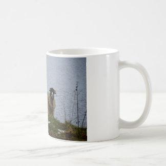 Sheep by the water coffee mug