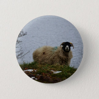 Sheep by the water pinback button