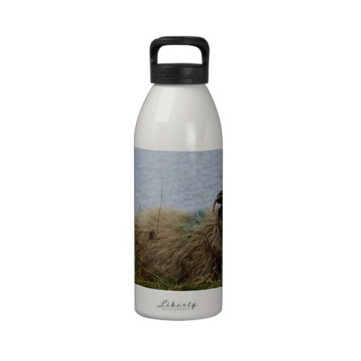 Sheep by the water water bottle