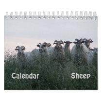 Sheep Calendar