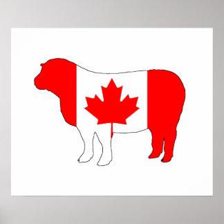 Sheep Canada Poster
