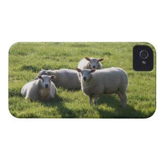 Sheep iPhone 4 Case-Mate Case