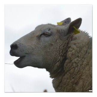 Sheep Chomping on Hay 5.25x5.25 Square Paper Invitation Card
