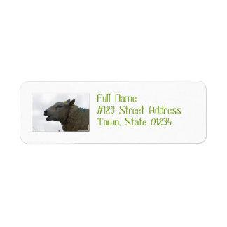 Sheep Chomping on Hay Custom Return Address Labels
