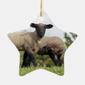 sheep ornamento de navidad